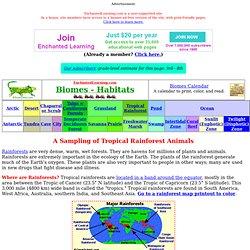 Rainforest animals: Zoom Rainforests
