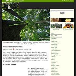 Rainforest Canopy Trees