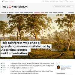 This rainforest was once a grassland savanna maintained by Aboriginal people – until colonisation
