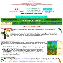 Zoom Rainforest