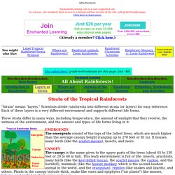Rainforest Strata- EnchantedLearning.com