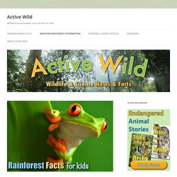Rainforest Facts For Kids - The Ultimate Guide