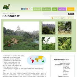 Rainforest - Reference