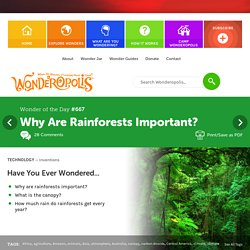 Why Are Rainforests Important?