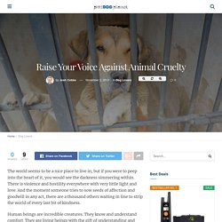 Raise Your Voice Against Animal Cruelty