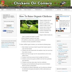How To Raise Organic Chickens | Chickens On Camera