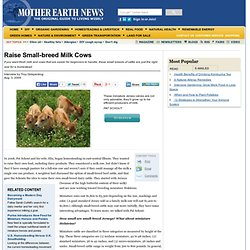 Raise Small-breed Milk Cows
