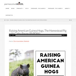 Raising American Guinea Hogs, Permaculture Voices The Homestead Pig with Cathy Payne (PVP086)