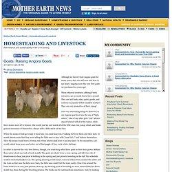 Goats: Raising Angora Goats - Caprine Community