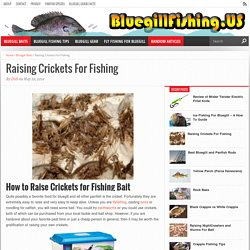 Raising Crickets For Fishing - A Favorite Food Choice for Panfish