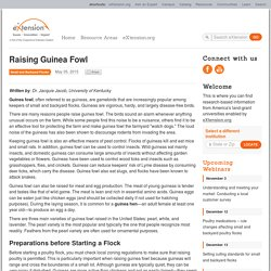 Raising Guinea Fowl - eXtension