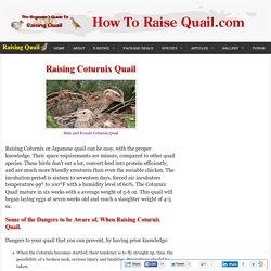 Raising Coturnix Quail