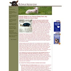 Raising Icelandic Sheep in Vermont and New England