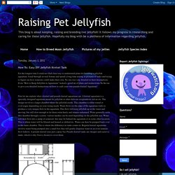 Raising Pet Jellyfish: How To: Easy DIY Jellyfish Kreisel Tank