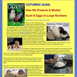 Coturnix Quail In The Game Bird Gazette