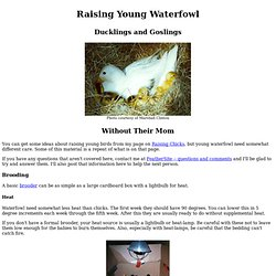 Raising Young Waterfowl