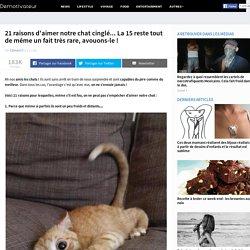 21 raisons d'aimer notre chat cinglé... La 15 reste tout de même un fait très rare, avouons-le !