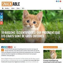10 raisons qui prouvent que les chats sont de gros enfoirés
