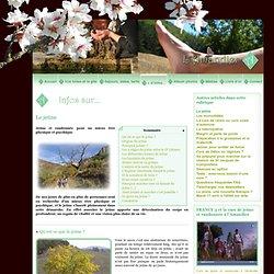 Jeûne et randonnée à l'Amandier, dans la Drôme : Le jeûne