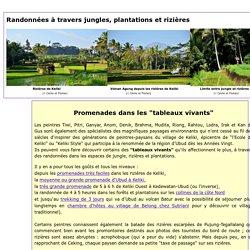 Randonnées en rizières et jungle à Bali, promenades avec guide francophone