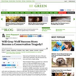 Will Gray Wolf Success Story Become a Conservation Tragedy?