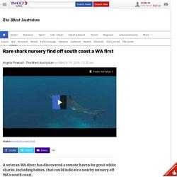 Rare shark nursery find a WA first