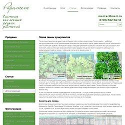Посев семян суккулентов - Raritet-plants