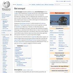 WIKIPEDIA - Rat musqué.