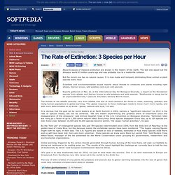 The Rate of Extinction: 3 Species per Hour