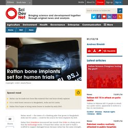 Rattan bone implants set for human trials - SciDev.Net South Asia
