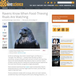 Ravens Know When Food-Thieving Rivals Are Watching
