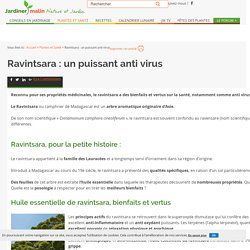 Ravintsara : bienfaits et vertus de l'huile essentielle