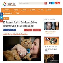 25 Razones Por Las Que Todos Deben Tener Un Gato. ¡No Conocía La #5!