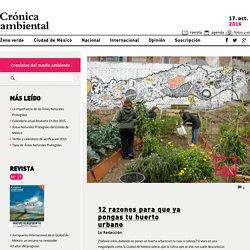12 razones para que ya pongas tu huerto urbano - Crónica ambiental