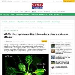 VIDEO. La réaction interne d'une plante après une attaque