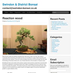 Reaction wood « Swindon & District Bonsai