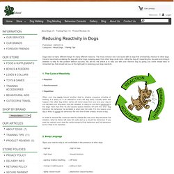 Reducing Reactivity in Dogs - The Pawfectionist