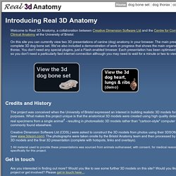 Real 3D Anatomy Home
