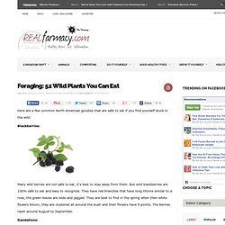 Foraging: 52 Wild Plants You Can Eat
