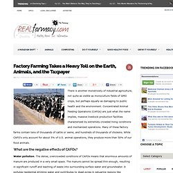 Factory Farming Takes a Heavy Toll on the Earth, Animals, and the Taxpayer