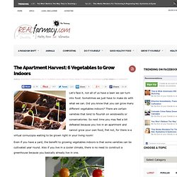 The Apartment Harvest: 6 Vegetables to Grow Indoors