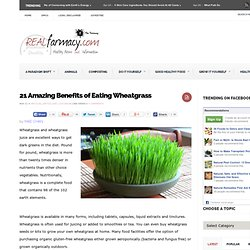 21 Amazing Benefits of Eating Wheatgrass