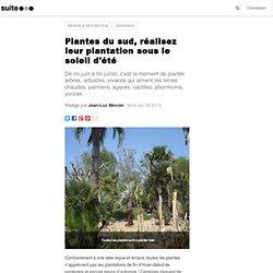 Plantes du sud, réalisez leur plantation sous le soleil d'été