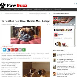12 Realities New Boxer Owners Must Accept