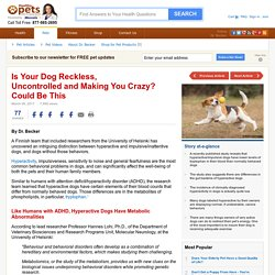 Is Your Dog Really Hyperactive, or Is This the Problem?