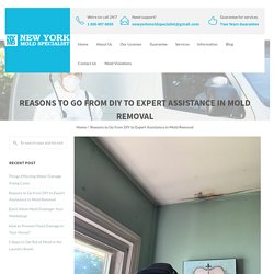 Reasons to Go from DIY to Expert Assistance in Mold Removal