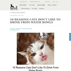 10 Reasons Cats Don't Like To Drink From Water Bowls