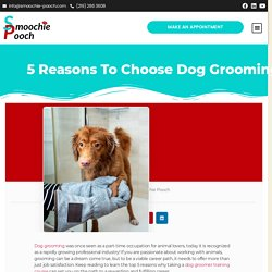 5 Reasons to Choose Dog Grooming as Your New Career Path