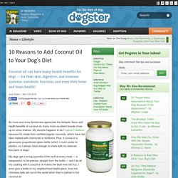 10 Reasons to Add Coconut Oil to Your Dog's Diet - Dogster
