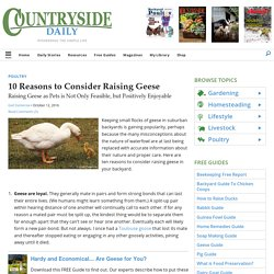 10 Reasons to Consider Raising Geese - Countryside Network